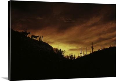 Sunset Sonoran Desert Tuscon AZ