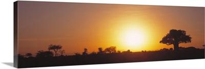 Sunset Tarangire Tanzania Africa