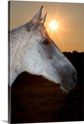 Sunstar Behind Horse