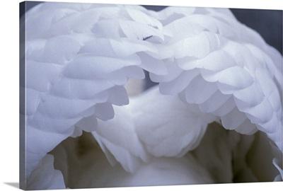Swans Wings