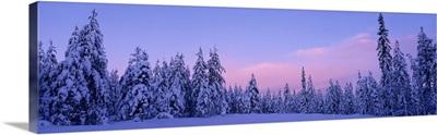 Sweden, Dalarna , forest, winter