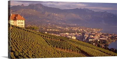 Switzerland, Vevey , vineyards