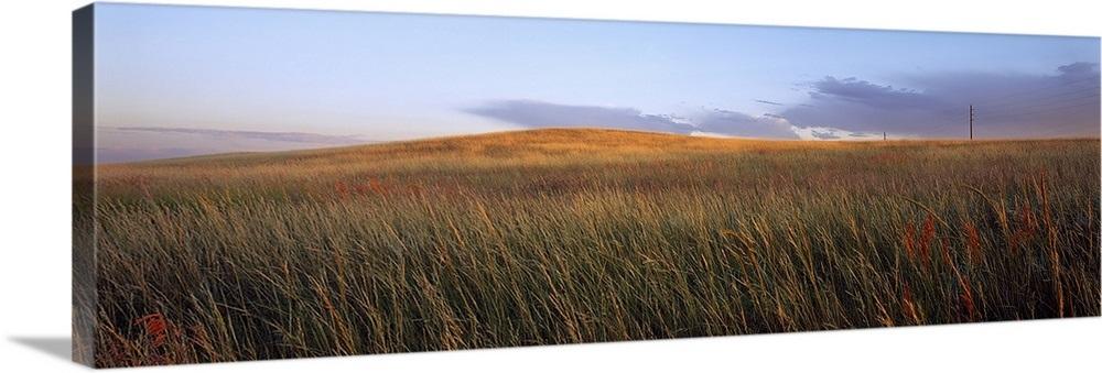 Tall grass in a field, High Plains, Cheyenne, Wyoming