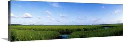 Tall grass in a swamp, Savannah, Georgia
