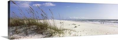 Tall grass on beach, Gulf Islands National Seashore, Pensacola, Florida