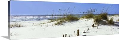 Tall grass on the beach, Gulf Islands National Seashore, Pensacola, Florida