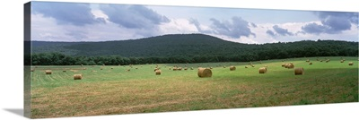 Tennessee, Warren County, Hay bales in the farmland