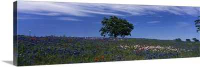 Texas, hill country