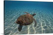 Tortoise w/Marine View