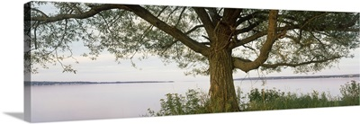 Tree at the lakeside, Wisconsin