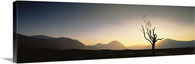 Tree Glencoe Highlands Scotland