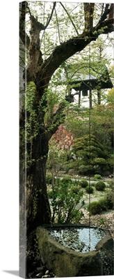 Tree in a garden, Kozan-ji, Yamagata, Japan