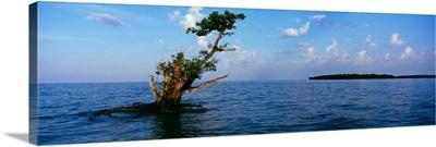 Tree in the sea, Ten Thousand Islands, Florida,