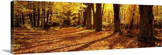 Tree Lined Road MA