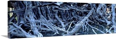 Tree Roots Amazon Brazil