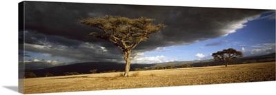 Tree w\storm clouds Tanzania