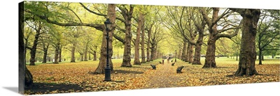 Trees along a footpath in a park, Green Park, London, England
