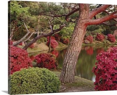 Trees along a lake, Byodo-In, Kyoto Prefecture, Honshu, Japan