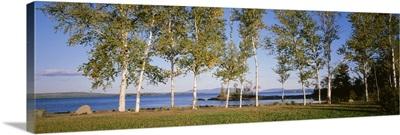 Trees along a lake, Moosehead Lake, Maine