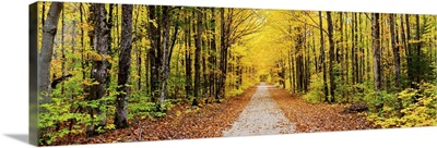 Trees along a pathway in autumn, Hiawatha National Forest, Alger County, Michigan