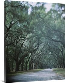 Trees along a road, Savannah, Georgia