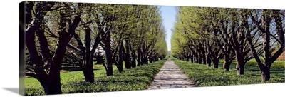 Trees along a walkway in a botanical garden, Niagara Falls, Ontario, Canada