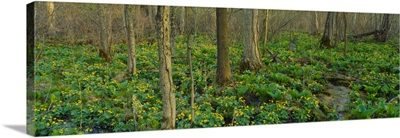Trees among yellow flowers in the forest, Cedar Bog, Urbana, Ohio