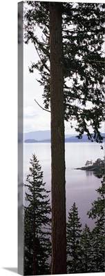 Trees at the seaside, Teddy Bear Cove, Chuckanut Bay, Skagit County, Washington State,