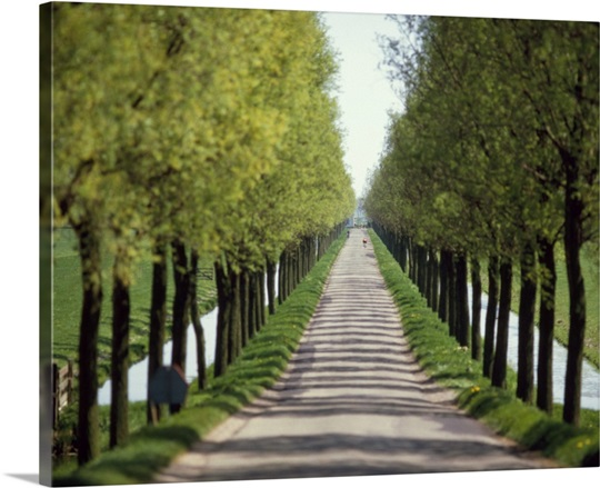Trees Both Sides Of A Road Wall Art Canvas Prints Framed
