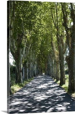 Trees both sides of a road, Mane, Alpes de Haute Provence