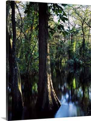Trees growing in reflective water of Loxahatchee River, Loxahatchee Wild and Scenic River, Florida