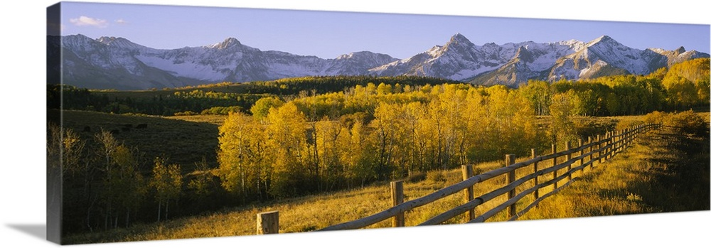 Trees In A Field Near A Wooden Fence Dallas Divide San Juan Mountains Colorado Wall Art Canvas Prints Framed Prints Wall Peels Great Big Canvas