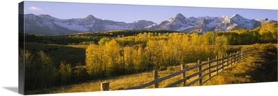 Trees in a field near a wooden fence, Dallas Divide, San Juan Mountains, Colorado