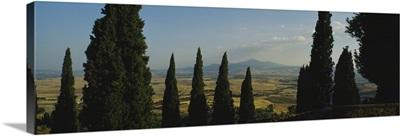 Trees in a field, Pienza, Tuscany, Italy