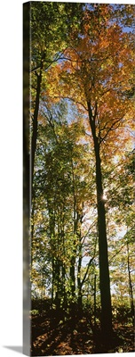Trees in a forest at Carpenter Falls, Finger Lakes, New York State