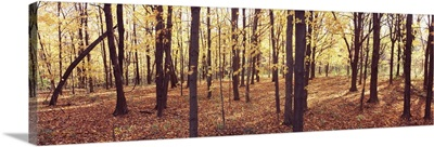Trees in a forest, Baxters Hollow State Natural Area, Wisconsin Department of Natural Resources, Wisconsin,