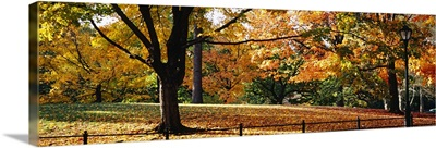 Trees in a forest, Central Park, Manhattan, New York City, New York