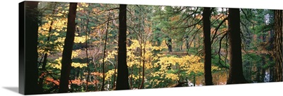 Trees in a forest during autumn