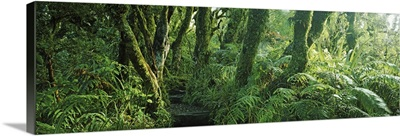 Trees in a forest, Mount Taranaki, Mount Egmon, North Island, New Zealand