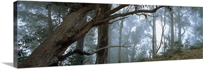 Trees in a forest, Rabacal, Madeira, Portugal