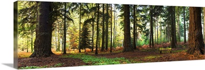 Trees in a forest, Rhinefield Ornamental Drive, New Forest, Hampshire, England