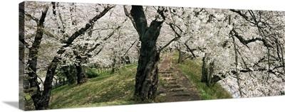 Trees in a garden, Kajo Castle, Yamagata Prefecture, Honshu, Japan