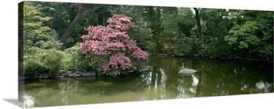 Trees in a garden, Sento Gosho, Kyoto Prefecture, Honshu, Japan