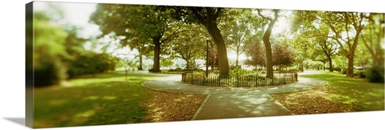 Trees in a park McCarren Park Greenpoint Brooklyn New York City New ...