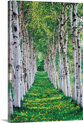 Trees in a row with yellow meadow flowers on ground