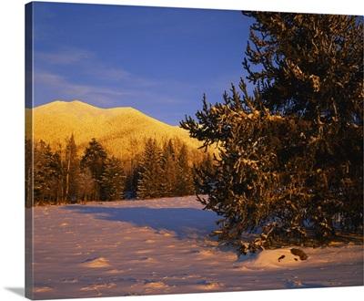Trees in a ski resort, Arizona Snowbowl, Mt Humphreys, San Francisco Peaks, Coconino National Forest, Arizona