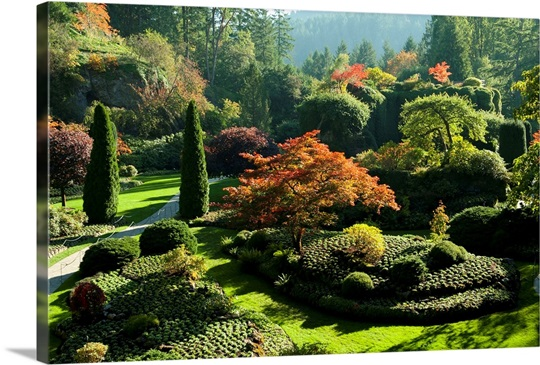 Trees In Butchart Gardens Victoria Vancouver Island