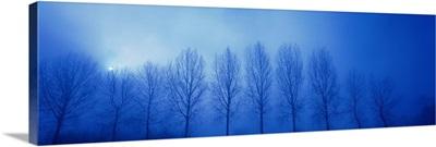 Trees in Fog Damme Belgium