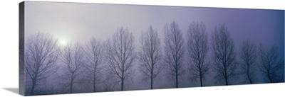 Trees in Mist Damme Belgium