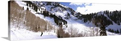 Trees in snow, Snowbird Ski Resort, Utah
